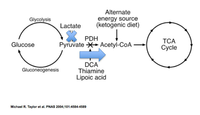Wirkungsweise von Dichloracetat (DCA)