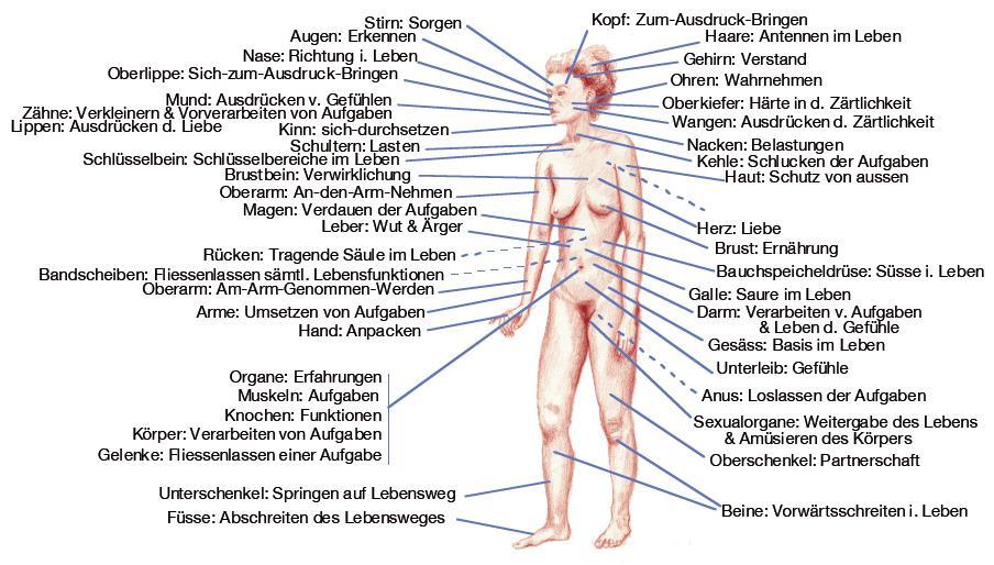 Körpersprache - Organsprache